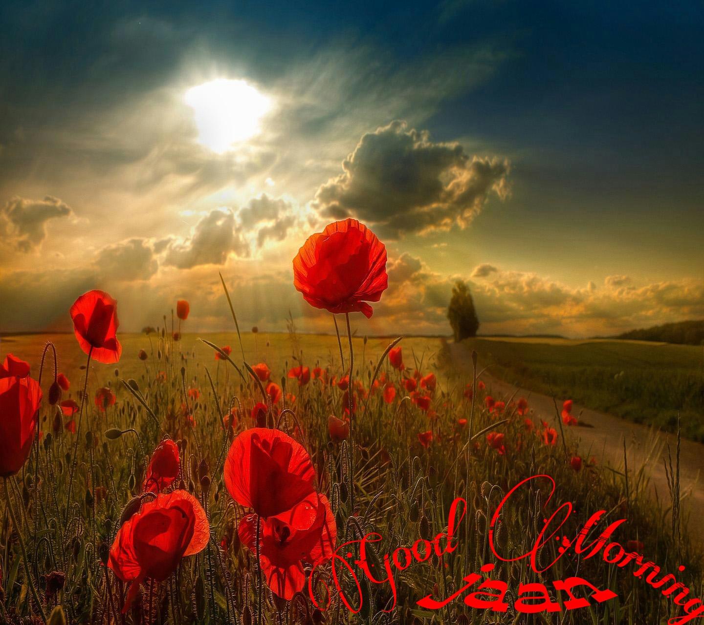 Good Morning Jaan Quotes: Good Morning Jaan Beautiful Flower Colorful Nature Good