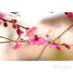 flower cute spring winter japan