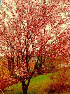 color splash colorful flower nature photography