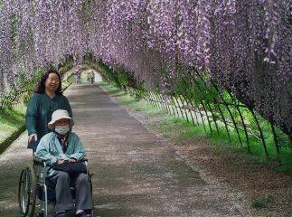 japan photo kyusyu fukuoka kawauchifuji