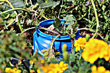 garden coffee recycle reuse reduce