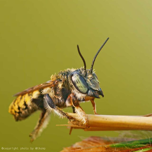 Bee  #macro #mybest_macro