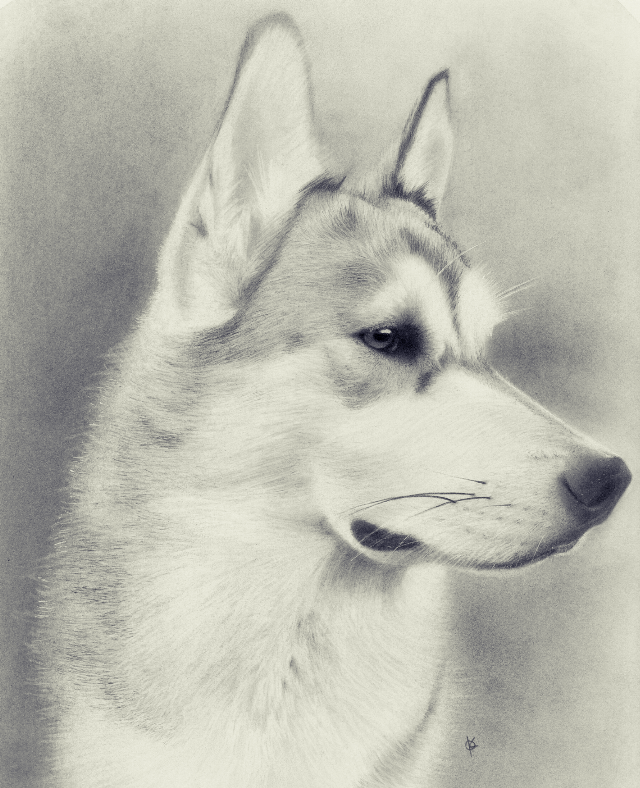 Auction commission for Any Dog 'il Do Rescue finally done :) #blackandwhite #petsandanimals #pencilart #art #drawing #graphite