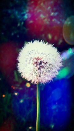 colorful color splash flower love cute