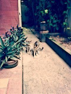 photography cats home wapcartoonizer nature