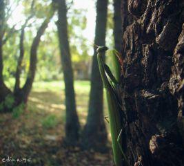 wappark nature