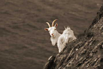 scotland photography nature color petsandanimals