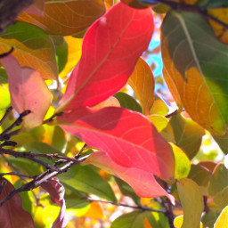 colorful nature photography fall red