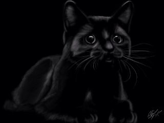 wdpblackcat