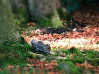 autumn byebyesummer nature petsandanimals travel