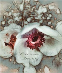 flower oldphoto nature card pencilart
