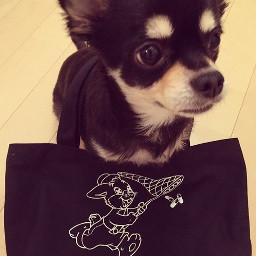 ruki adorable petsandanimals koron-chan cute