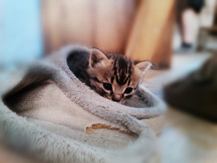 #WAPFurryFriends #cute #petsandanimals #photography  #mansbestfriend #kitten
