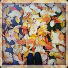 fall leaves autumn leaf nature