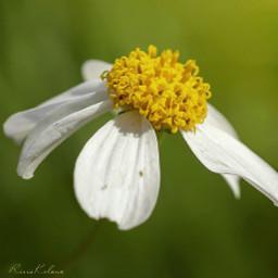 flower photography macroart macro indonesia