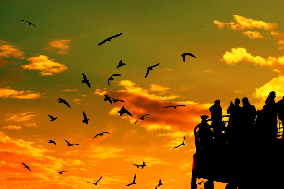 #bird #birds #sky #people #photography #sunset #nature #siluet