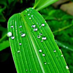nature rain blur dews leafs