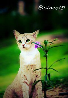 cat petsandanimals nature flower spring