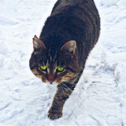 photography petsandanimals snow winter