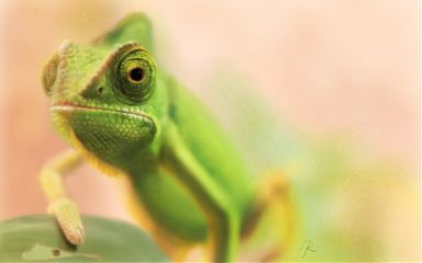drawing digitaldrawing petsandanimals chameleon