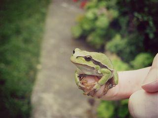 photography frog rain cute petsandanimals
